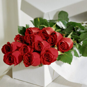 rosas C-07
