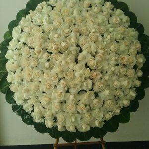 Corona en Rosa Blanca